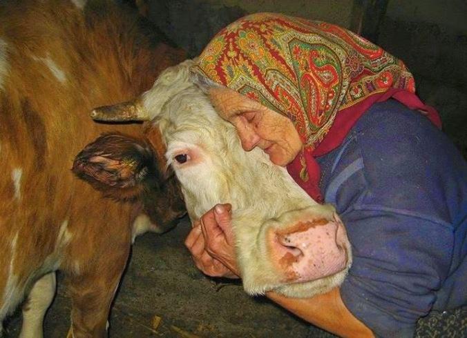 kobieta i krowa